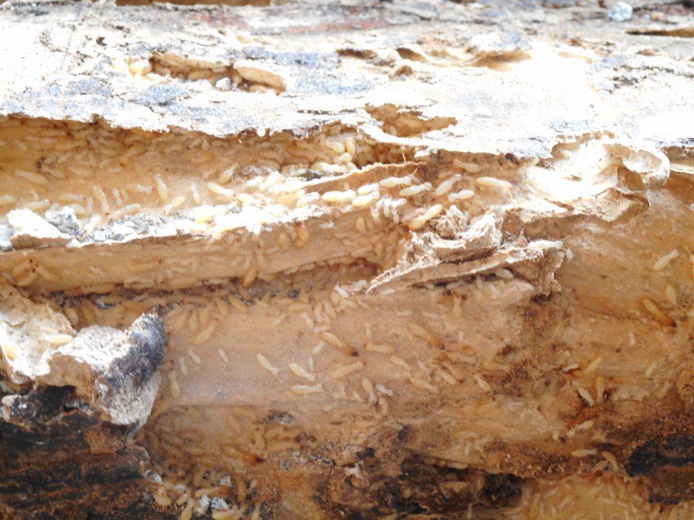 シロアリ被害の写真